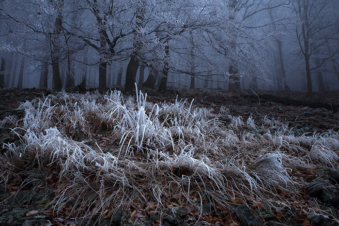 Cínový les