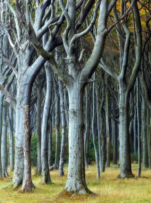 Curly Trees