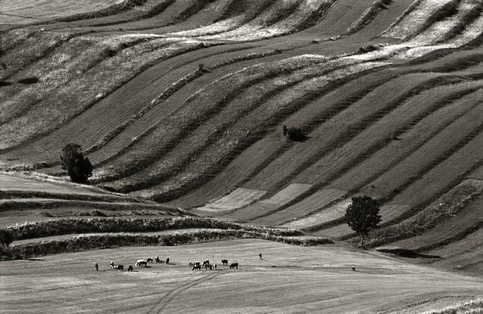 Autumn grazing land