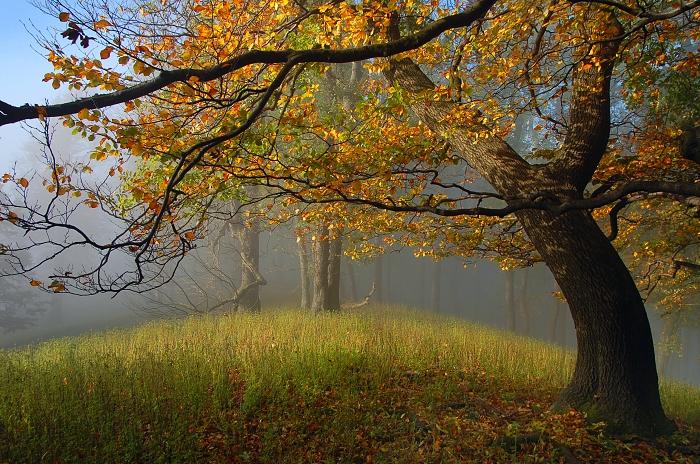 Carpathian Fall