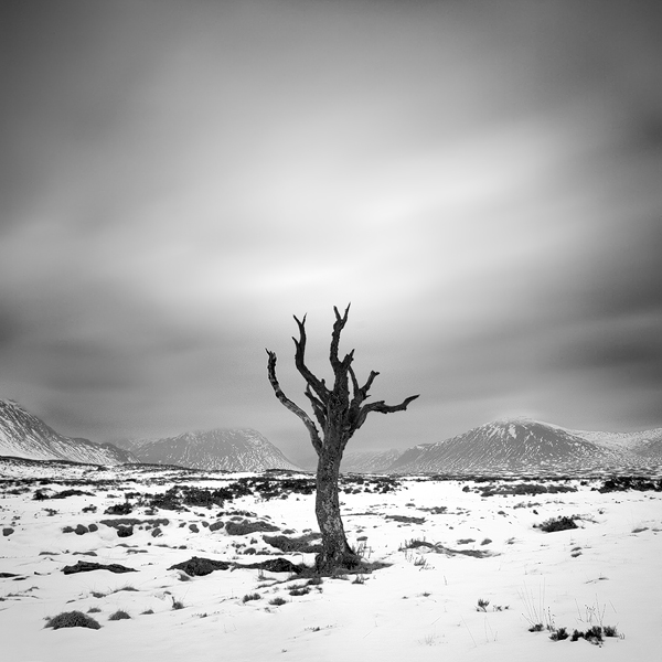 Dead Tree in Glen Coe