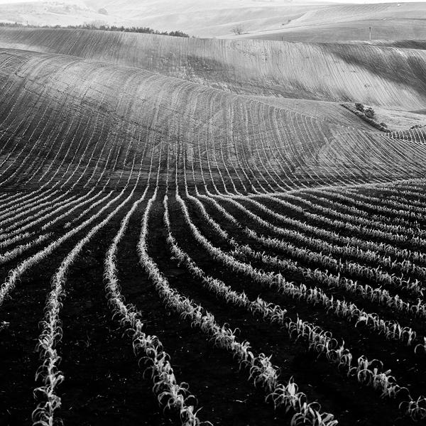 Moravia fields