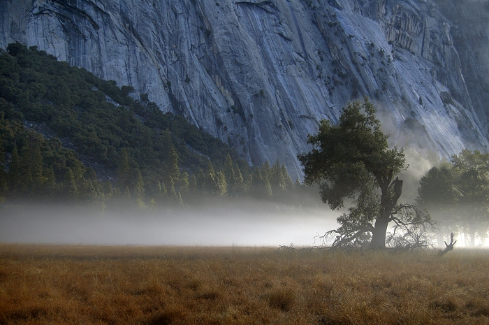 Morning in Yosemites