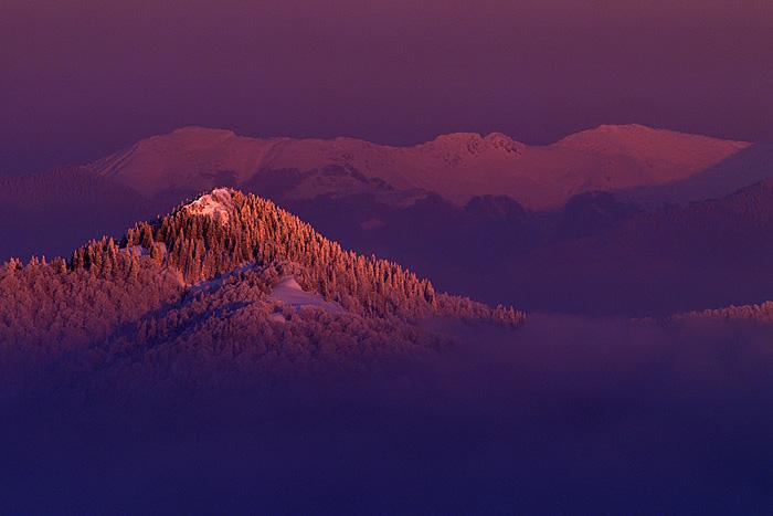 The Purple Island