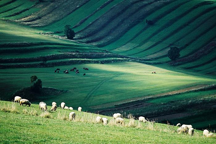 Zelené pastorále