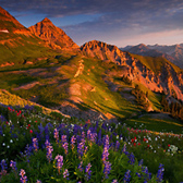 Blooming Sunrise