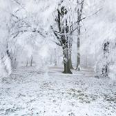 Deep frost