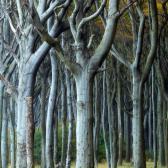Random landscape photo - Curly Trees