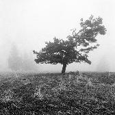Random landscape photo - A Foggy Day