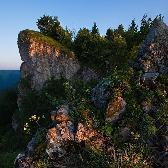 Random landscape photo - Alpine Plant