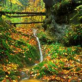 Random landscape photo - Autumn Gold