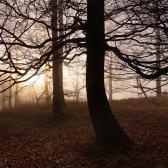 Random landscape photo - Branches