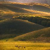 Random landscape photo - Country of horses