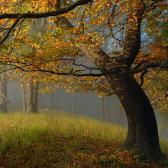 Random landscape photo - Carpathian Fall