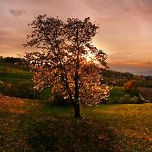 Random landscape photo - Cherry tree sunset