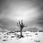 Random landscape photo - Dead Tree in Glen Coe