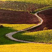 Random landscape photo - Field path