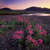 Random landscape photo - Flower Cover