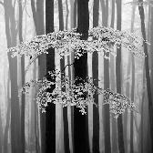 Random landscape photo - Foggy forest