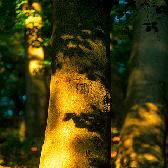 Random landscape photo - Forest Light
