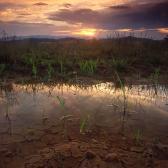 Random landscape photo - Frog