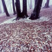Random landscape photo - Forest