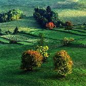 Random landscape photo - In Autumn Dress