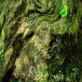 Random landscape photo - Forest Impression