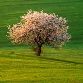 Random landscape photo - Meadow