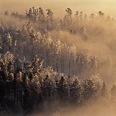 Random landscape photo - Mist Performance