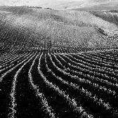 Random landscape photo - Moravia fields