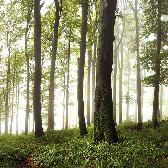 Random landscape photo - Nořičí hora