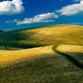 Random landscape photo - Path