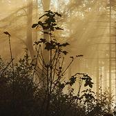 Random landscape photo - Pod Velkým Javorníkem