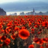 Random landscape photo - Poppy Tale