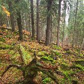 Random landscape photo - Primeval Forest  Zadná Poľana