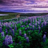 Random landscape photo - Purple Landscape