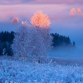 Random landscape photo - Winter Charm