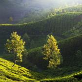 Random landscape photo - Munnar