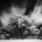 Random landscape photo - Old Pear Tree