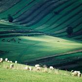 Random landscape photo - Zelené pastorále