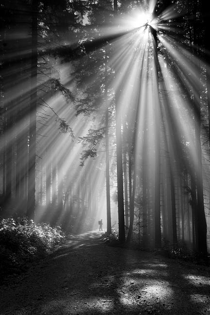 Tajomným lesom